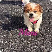 Adopt A Pet :: Mimi - Maitland, FL