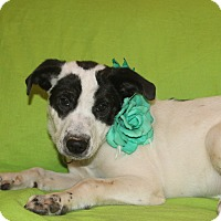 Border Collie Mix Puppy for adoption in Hagerstown, Maryland - Peaches