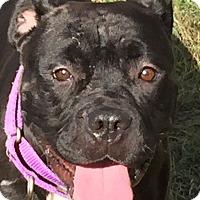 Adopt A Pet :: PRINCESS - PENDING - Bolingbrook, IL