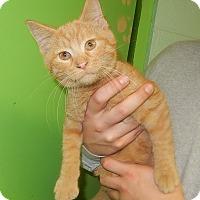 Adopt A Pet :: Sparky - Newport, NC