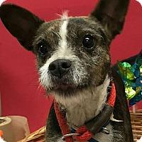 Adopt A Pet :: Misty - Decatur, AL