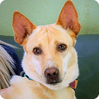 Adopt A Pet :: Sweetie - Long Beach, NY