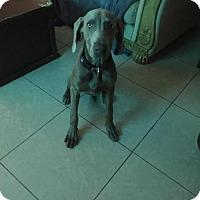 Adopt A Pet :: Floyd - Maricopa, AZ