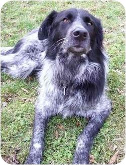 Daisy- Adopted | Adopted Dog | Nashville, TN | English ...