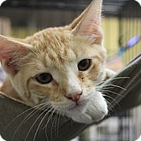 Adopt A Pet :: riddler - Santa Monica, CA