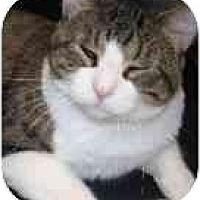 Adopt A Pet :: Oh Henry - Lake Ronkonkoma, NY