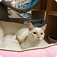 Adopt A Pet :: Mr. Big - Monroe, GA