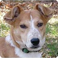 Adopt A Pet :: Tater - Mocksville, NC