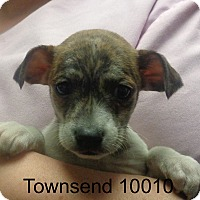 Adopt A Pet :: Townsend - baltimore, MD