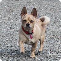 Adopt A Pet :: Rio - Winters, CA
