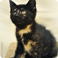 Adopt A Pet :: Etta James - Ortonville, MI