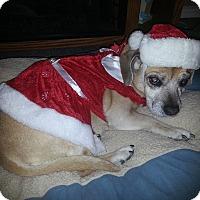 Adopt A Pet :: Daisey - Ogden, UT