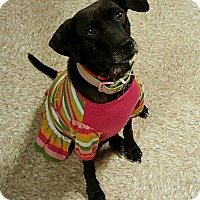 Adopt A Pet :: Sheena - Marlton, NJ