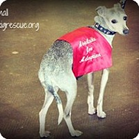 Adopt A Pet :: So Small - Richardson, TX