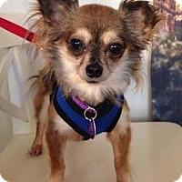 Adopt A Pet :: Dixie D4147 - Fremont, CA