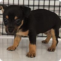 Adopt A Pet :: Dahli#6F - Orlando, FL