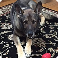 Adopt A Pet :: Thunder - Acushnet, MA