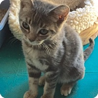 Adopt A Pet :: Misty - Sherman Oaks, CA