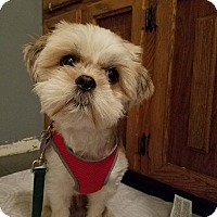 Adopt A Pet :: Ralphie - Adoption Pending - Youngstown, OH