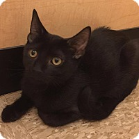 Adopt A Pet :: Coalbie - Apex, NC