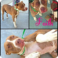 Adopt A Pet :: Faith - California City, CA