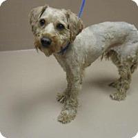 Adopt A Pet :: SPARKY - Reno, NV