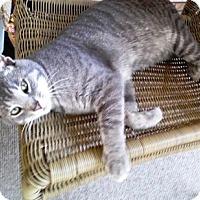 Adopt A Pet :: Smokey - Somerset, KY