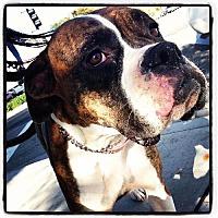 Adopt A Pet :: Zoe - Fremont, CA
