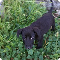 Adopt A Pet :: Molly - Clear Brook, VA