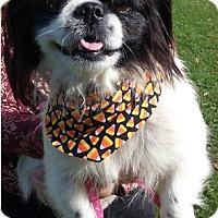 Adopt A Pet :: Gizzy - Canton, OH