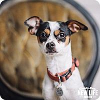 Adopt A Pet :: Ralph - Portland, OR