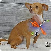 Adopt A Pet :: Floppy - Conroe, TX