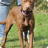 Adopt A Pet :: Helen - Lisbon, OH