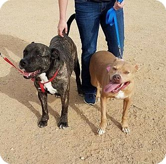 Shepherd (Unknown Type)/Boxer Mix Dog for adoption in Beverly Hills, California - Bruce