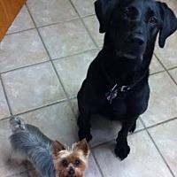 Adopt A Pet :: Milo - Mobile, AL