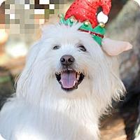 Adopt A Pet :: DANNY - Boston, MA