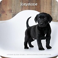 Adopt A Pet :: Keystone - Denver, CO
