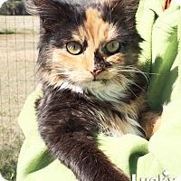 Adopt A Pet :: Rachel - Washington, DC