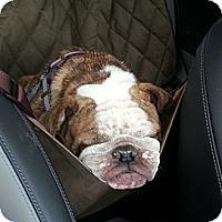 Adopt A Pet :: Emily - Decatur, IL