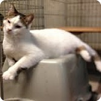 Adopt A Pet :: Blanche - Ortonville, MI