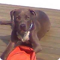 Adopt A Pet :: Rocco - East McKeesport, PA