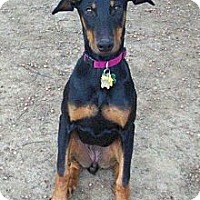 Adopt A Pet :: Leddie--adopted!! - New Richmond, OH