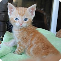 Adopt A Pet :: Rusty - Palmdale, CA