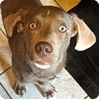 Adopt A Pet :: Hans - St. Louis, MO