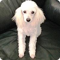 Adopt A Pet :: Meri - Dover, MA