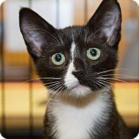 Adopt A Pet :: Reba - Irvine, CA