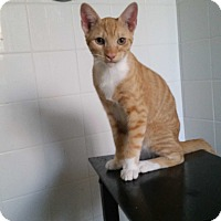 Adopt A Pet :: Handsome Man - Temecula, CA