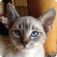 Adopt A Pet :: Spike - Winchester, CA