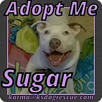 Adopt A Pet :: Sugar - Cheney, KS
