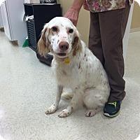 Adopt A Pet :: Mojo - Zanesville, OH